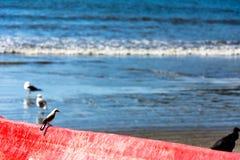 Smal站立的鸟孤独  免版税库存照片