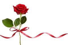 Smal红色丝绸丝带弓和红色玫瑰开花 库存照片