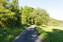 Smal bana som tänds av mjukt vårsolljus Skogvårnatur Naturligt landskap för vårskog med skogträd arkivbilder
