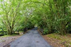 Smal bergväg och träbro som omges av ekar i gal. Royaltyfri Fotografi