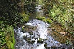 Smal flodström med klart vatten och växter på antingen sidor royaltyfri fotografi