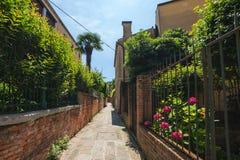 Smal gata i Venedig med lotten av den gröna buskaget arkivfoton