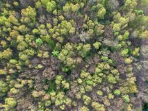 Smal gata mellan skogsmarken royaltyfri bild