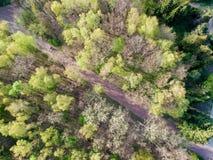 Smal gata mellan skogsmarken royaltyfria foton