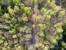 Smal gata mellan skogsmarken fotografering för bildbyråer