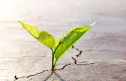 Plant growing from dried cracked soil. Royalty Free Stock Photos