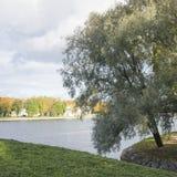 Smal jezioro w parku w mieście obraz royalty free