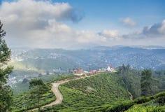 Smal lång slinga på kullarna för kolonier för svart te arkivbild
