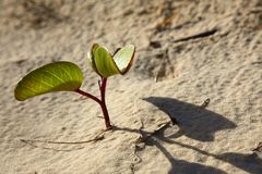Smal plant in a sand Royalty Free Stock Photo
