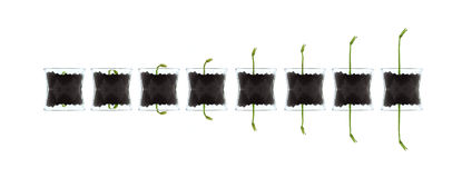 Smal plants isolated against white Stock Photo