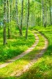 Smal road in birh forest Stock Photo