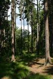 Smal skogbana på en solig dag Arkivbild