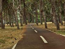 Smal väg till och med skogen Arkivfoton
