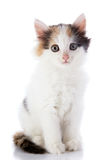The smal white kitten with color spots sits on a white background. Stock Photos