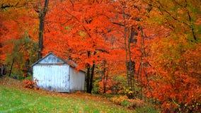 Small abandoned barn and autumn trees stock photos