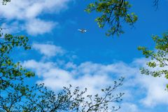 Small aircraft, private jet, traveling across a beautiful blue sky on a sunny day, with leaves and tree branches in the stock image