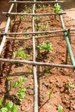 A small allotment garden. In the sun Stock Photography