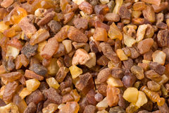 Free Small Ambers Stock Photo - 6670500