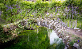 Small ancient bridge and plants of wisteria in the Garden of Nin Stock Photo