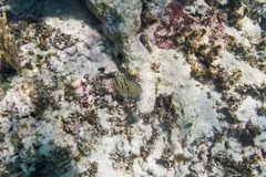 Dying coral reef Royalty Free Stock Photography