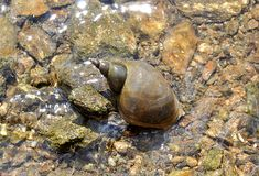 Small animal snail. Detail view, small animal snail stock photography
