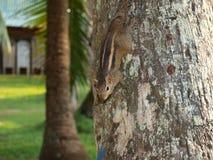 Small animal. In Sri Lanka Stock Images