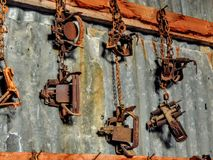 The small animal steel coil and spring traps and chains hang on the barn or tool shed wood and tin wall. The small animal steel coil and spring traps and chains Royalty Free Stock Image