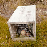 Small animal trap with written warning for humans. Baited small animal trap used for rat and stoat control with written warning for humans stock photos