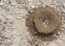 Small anthill from above Stock Image