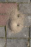Small anthill f. Small anthill of sand, dug by ants on the road from concrete tiles, close-up, top view stock photography