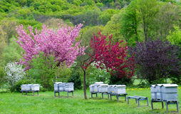 Small apiary. In the Vizille park, France Royalty Free Stock Photography