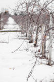 Small Apple Trees During Wintertime Royalty Free Stock Photo