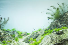 Small aquarium tank. With colorful fishes Stock Image