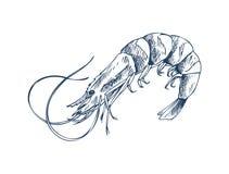 Small Aquatic Creature Shrimp Monochrome Depiction. Small aquatic crustacean shrimp monochrome depiction. Edible marine product sketch style icon isolated on stock illustration