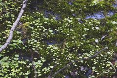 a small area of marshland stock images