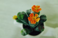 Small artificial cute flower. Artificial flower in the room,so cute Royalty Free Stock Photo