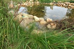 Small Artificial Decorative Pond On The Backyard In Summer Royalty Free Stock Image