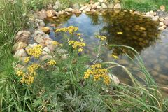 Small Artificial Decorative Pond On The Backyard In Summer Stock Photos