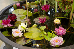 A small artificial pond in the garden Stock Photo