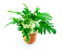 Small artificial tree in a pot Stock Photography