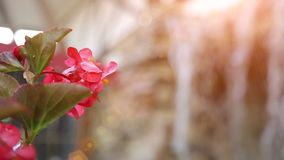 Small artificial waterfall through the green leaves. Pink flower stock footage
