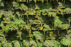 Small artificial waterfall. Small artificial vertical garden with waterfall on stone wall Stock Photography