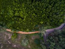 Small asphalt and dirt roads in dark green forest stock photo