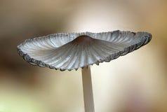 Small autumn mushroom. Stock Photo