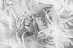 Small newborn baby`s feet covered with blanket, black and white Royalty Free Stock Image