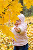 Small baby in forest Royalty Free Stock Image