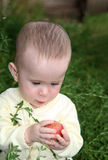Small baby holding apple Royalty Free Stock Image