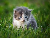 Baby kitten in grass royalty free stock images