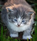 Baby kitten in grass. A small baby kitten in grass Stock Photography