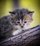 Baby kitten in grass. A small baby kitten in grass Royalty Free Stock Image